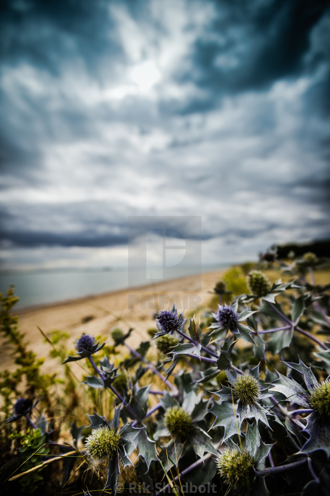 """Thistle in the storm"" stock image"