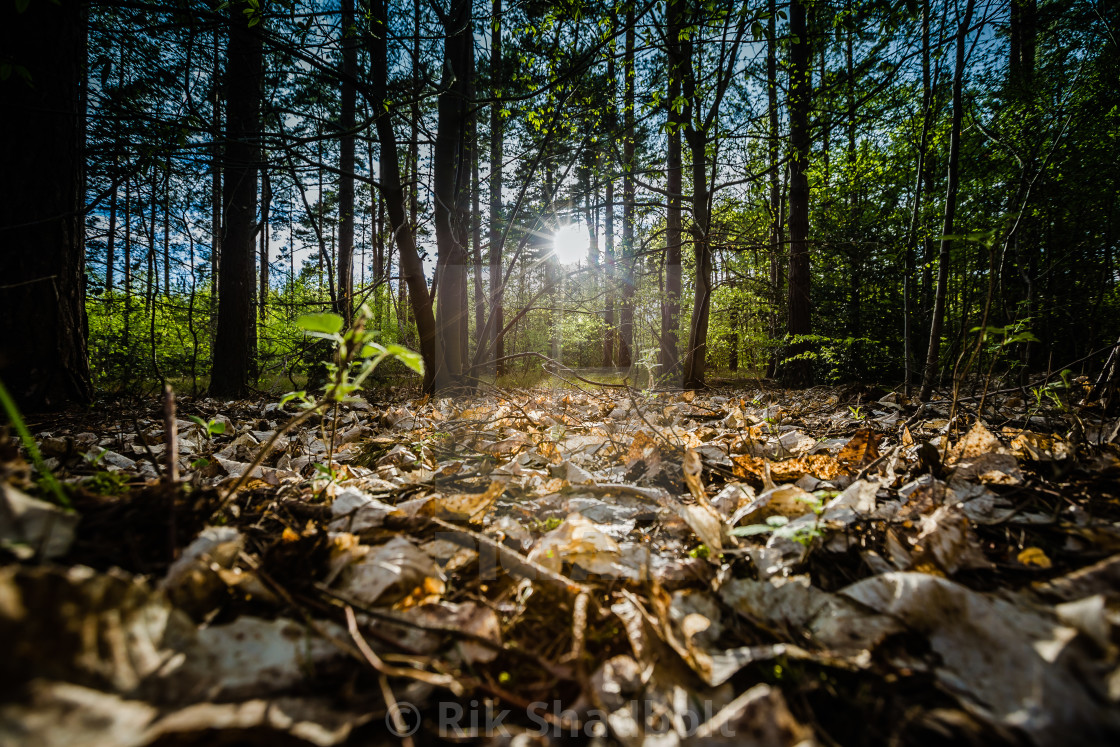 """Forest Floor"" stock image"