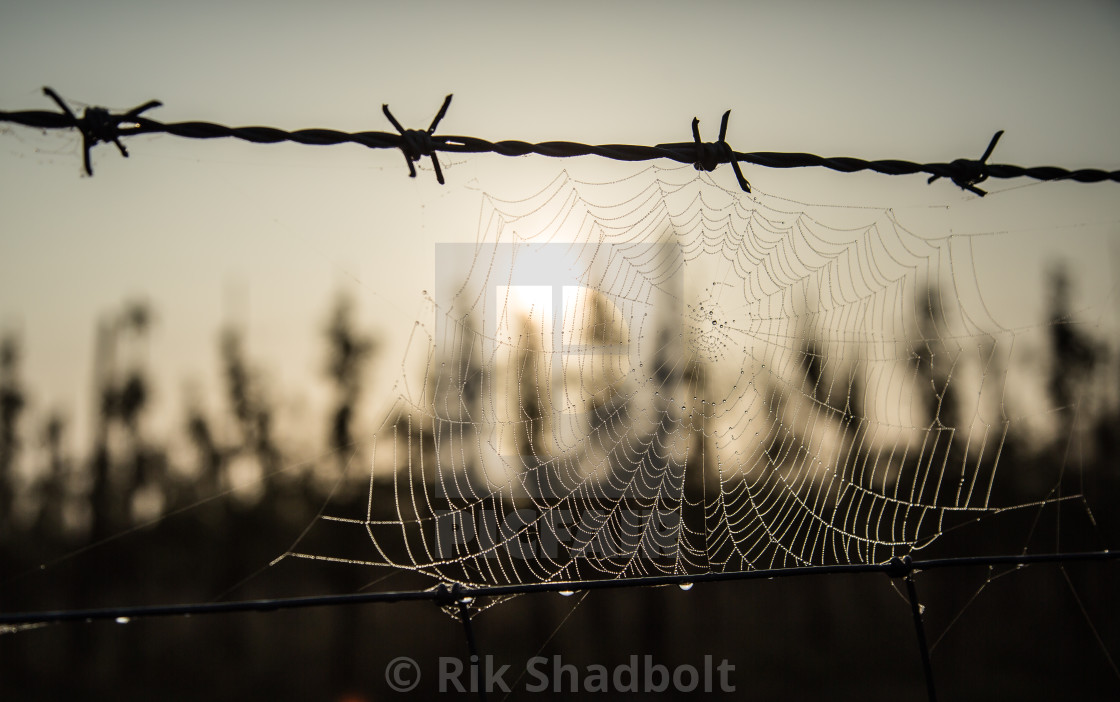 """Deadly Web"" stock image"