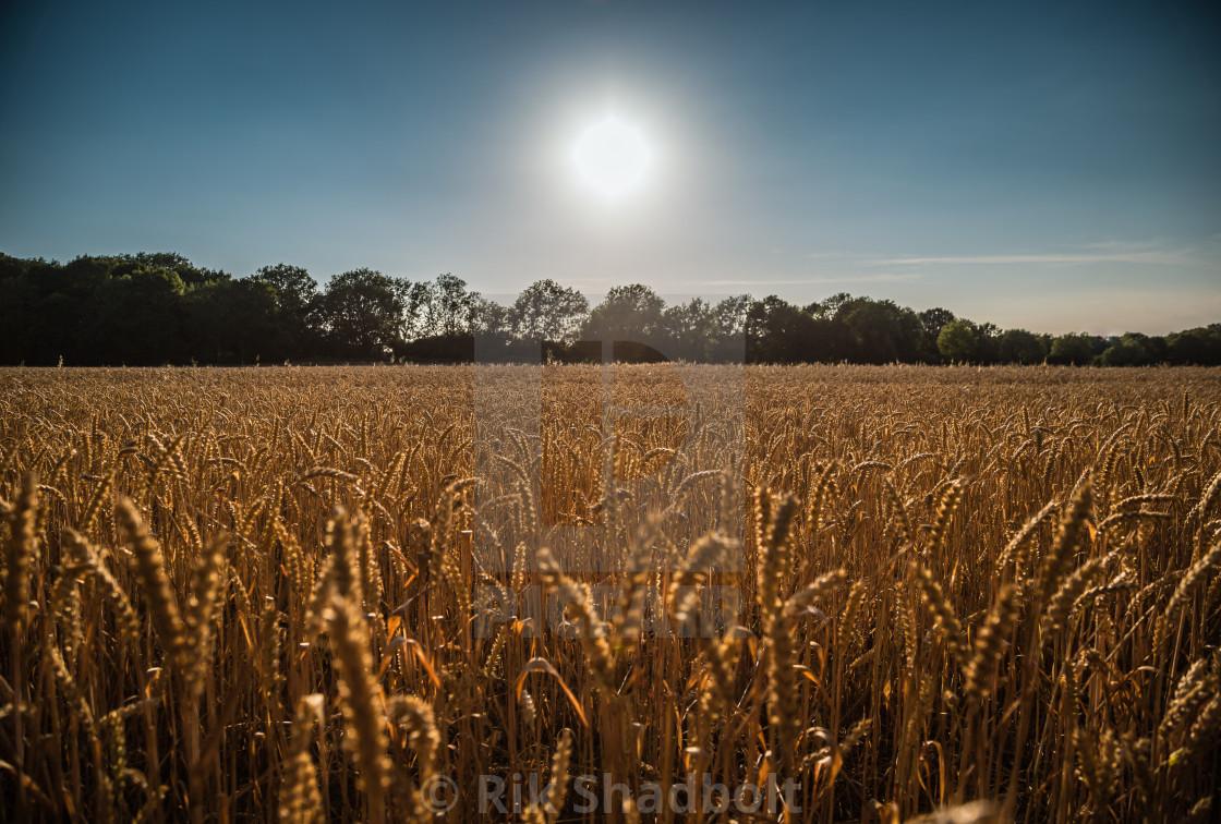 """""""Golden Sunset"""" stock image"""