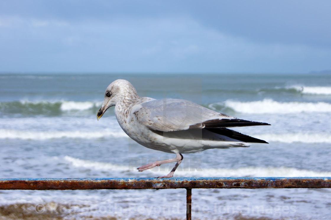 """""""'Gull'"""" stock image"""