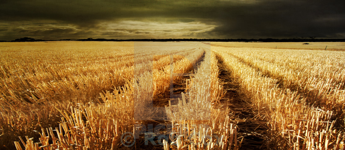 """Wheat Stubble: Lake Dumbleyung, Western Australia"" stock image"