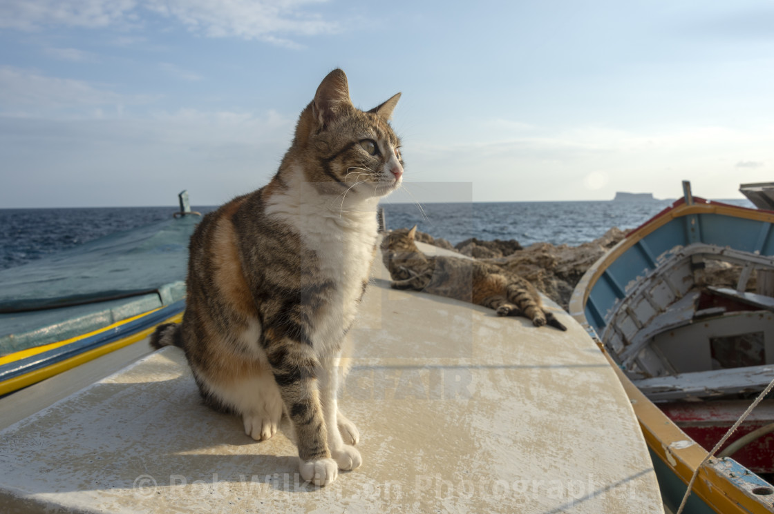 """cat sitting on the deck of a fishing boat in the harbour waiting for food from the fisherman"" stock image"