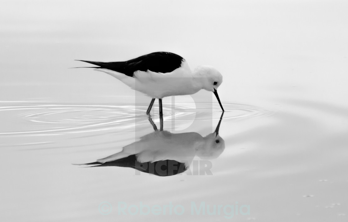 """b&w reflection"" stock image"