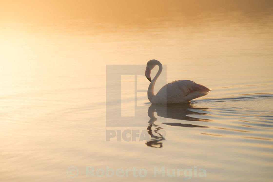 """sunrise bath"" stock image"