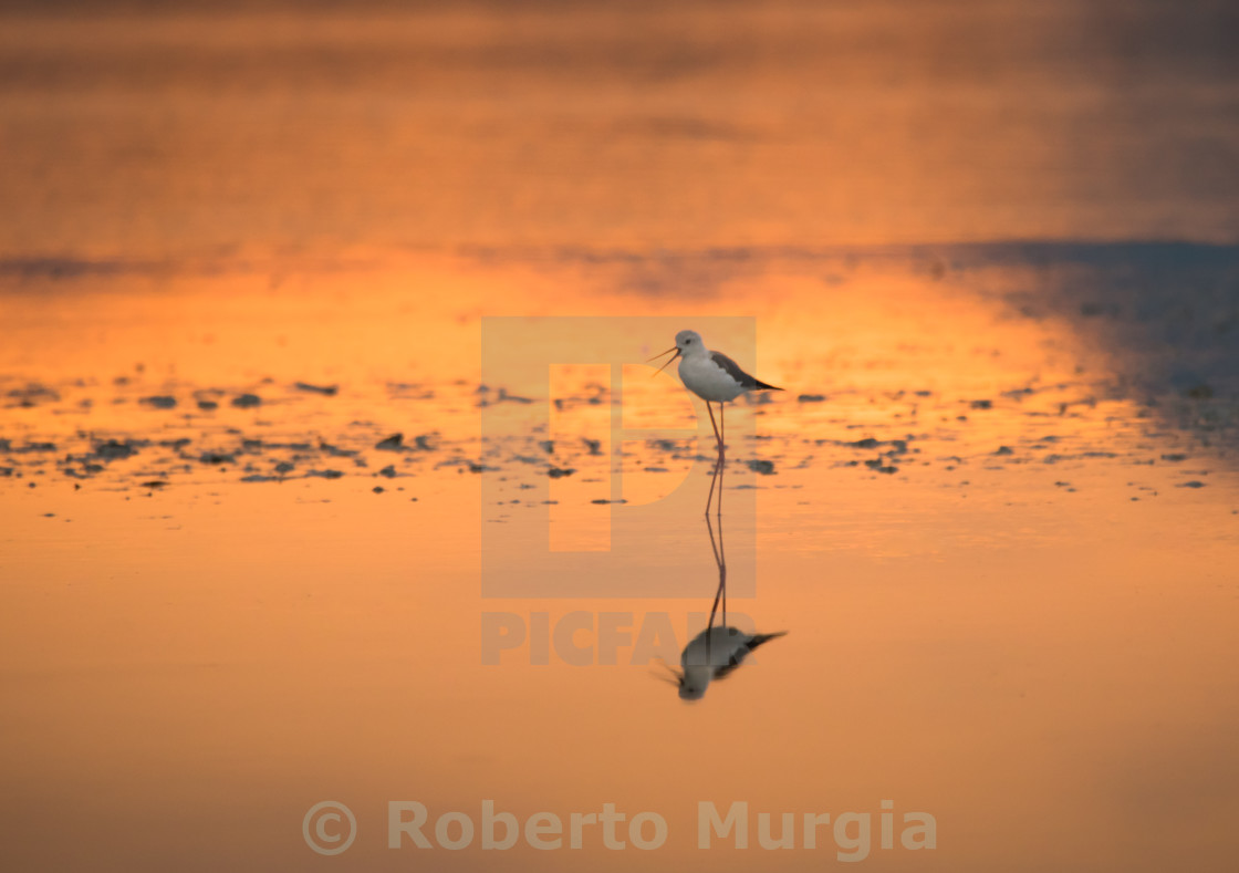 """sunrise and reflection"" stock image"