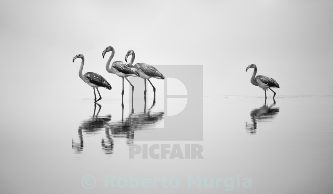 """walking flock II"" stock image"