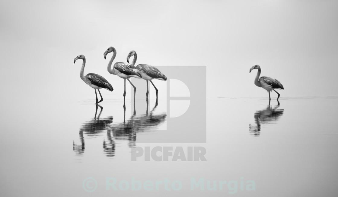 """""""walking flock II"""" stock image"""
