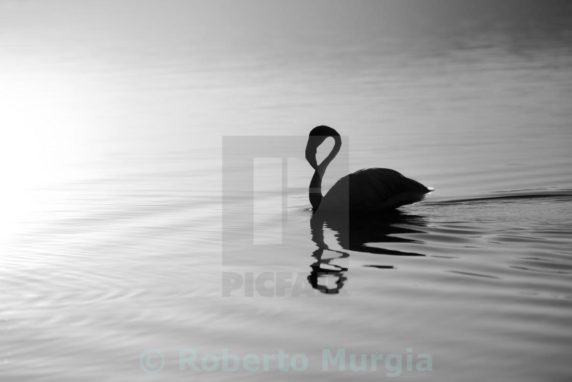 """silhouette bath"" stock image"