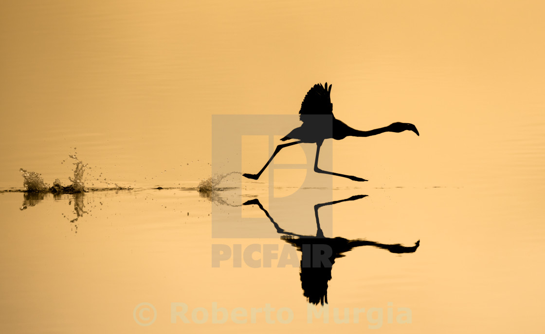 """silhouette run"" stock image"