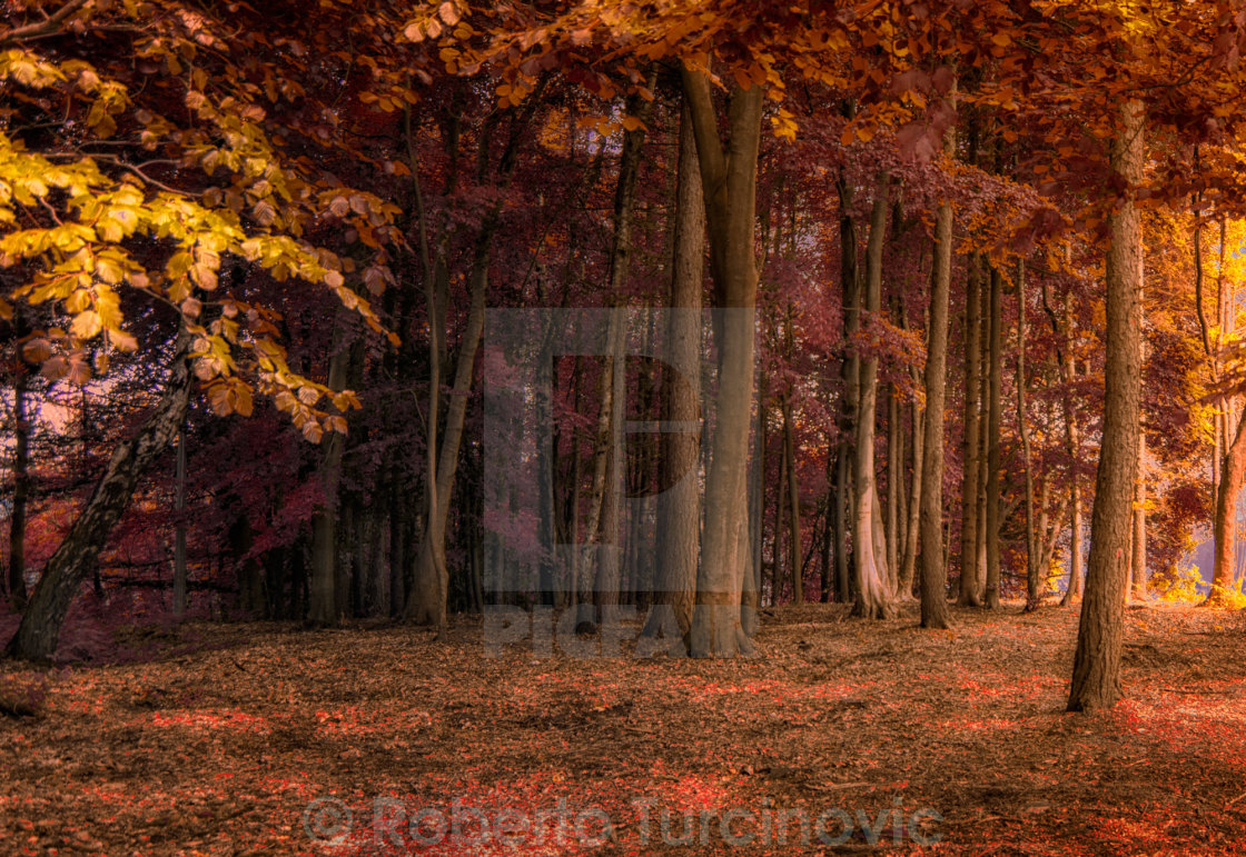"""Autumn"" stock image"