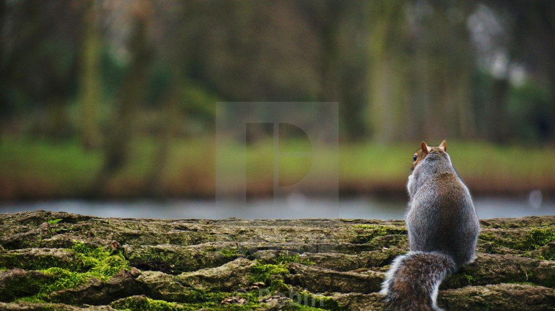 """""""A Squirrel's View"""" stock image"""