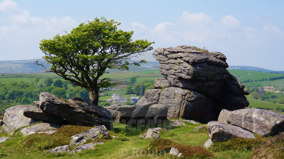 """The Tree and the Tor"" stock image"