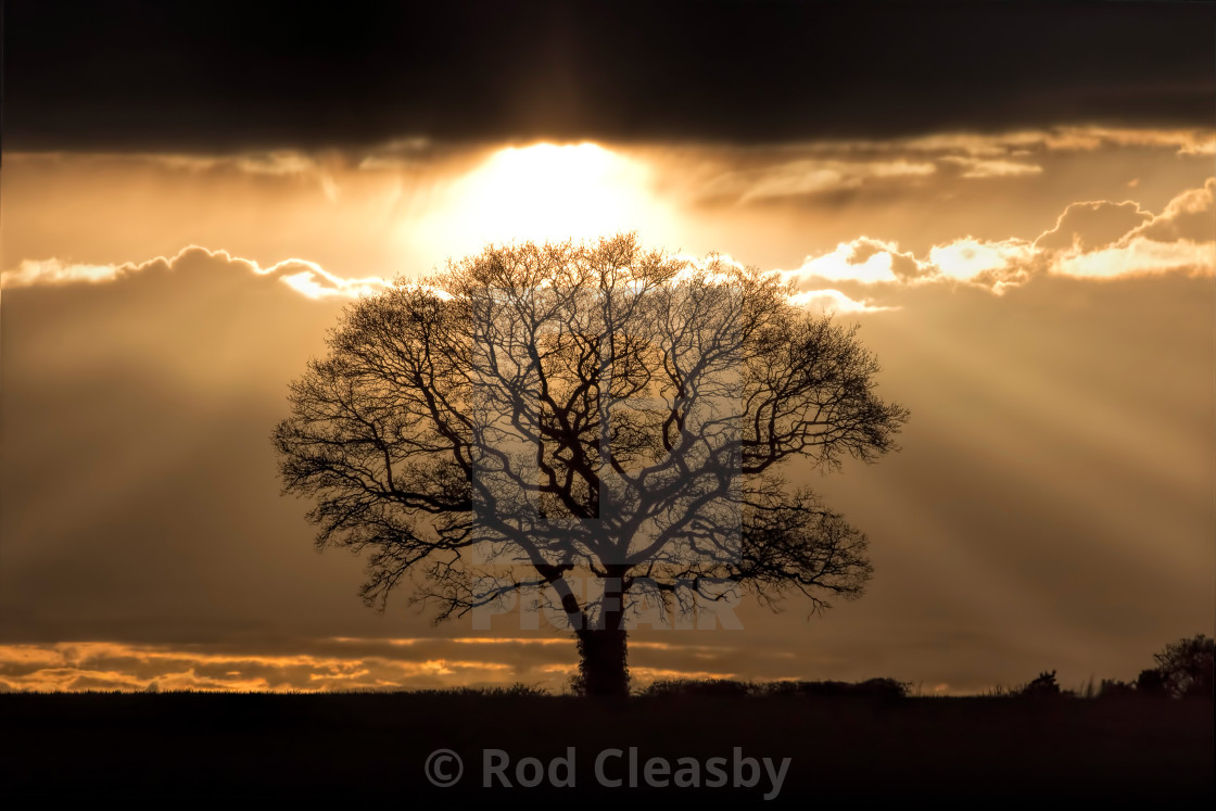 """""""THE TREE - LATE SPRING EVENING - 2017-4"""" stock image"""