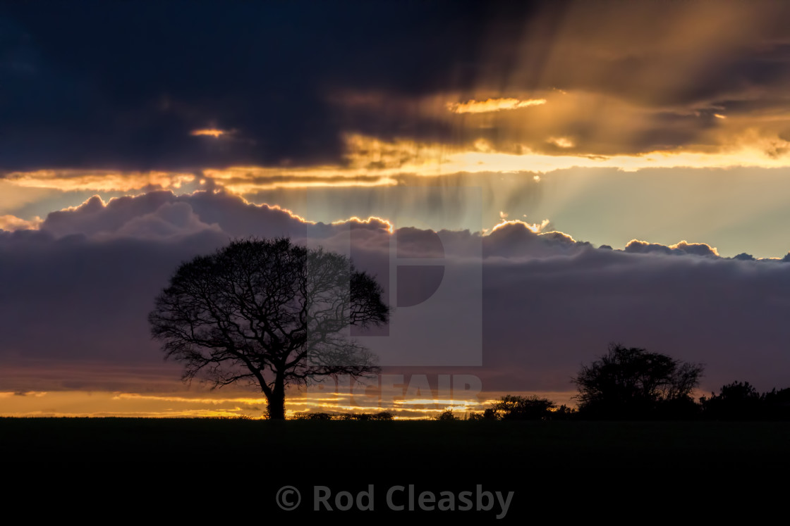 """""""THE TREE - END OF A BEAUTIFUL DAY - 2017-4"""" stock image"""