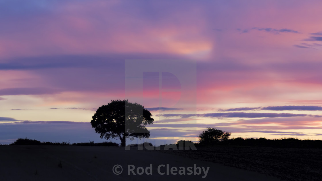 """THE TREE - Purple Passion - LATE SPRING EVENING - 2017-4"" stock image"