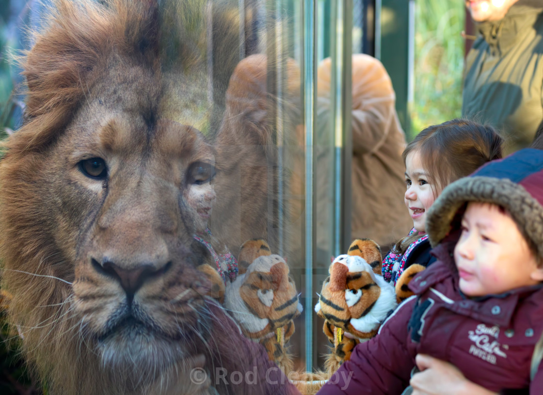 """""""The Lion and the Tiger. Every Picture Tells A Story."""" stock image"""
