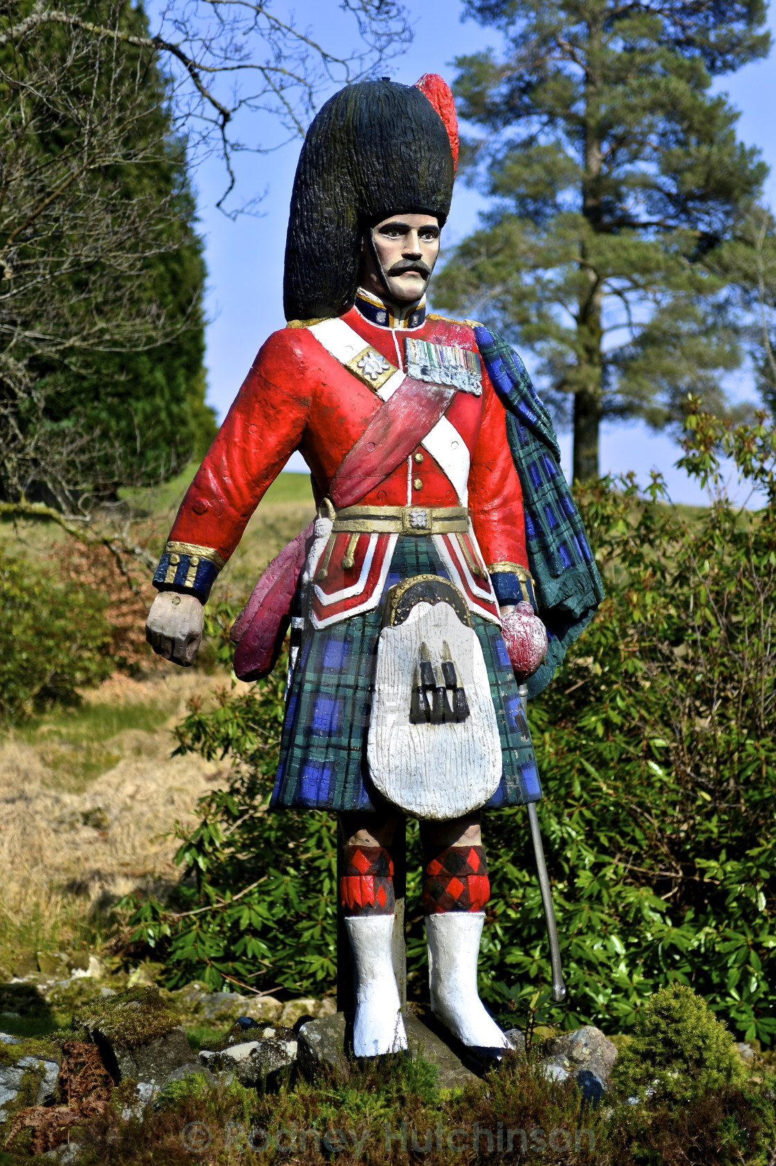 """""""Highlander at Forest Lodge, Dumfries and Galloway"""" stock image"""
