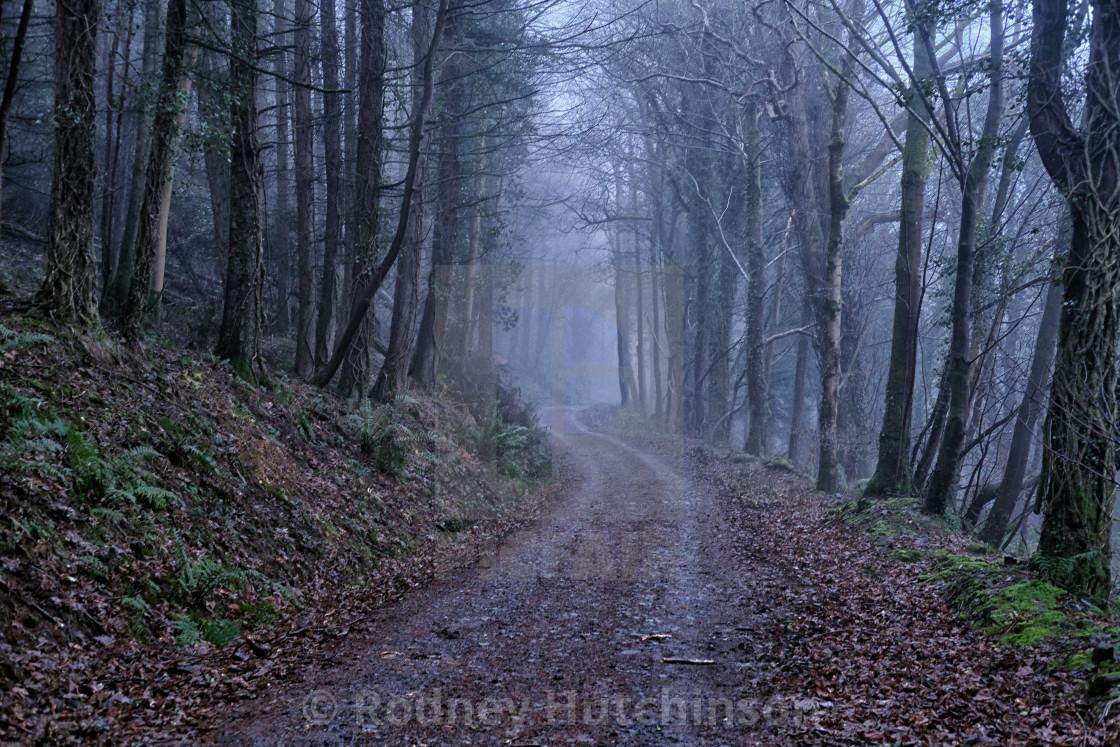 """""""Foggy Woodland Road"""" stock image"""