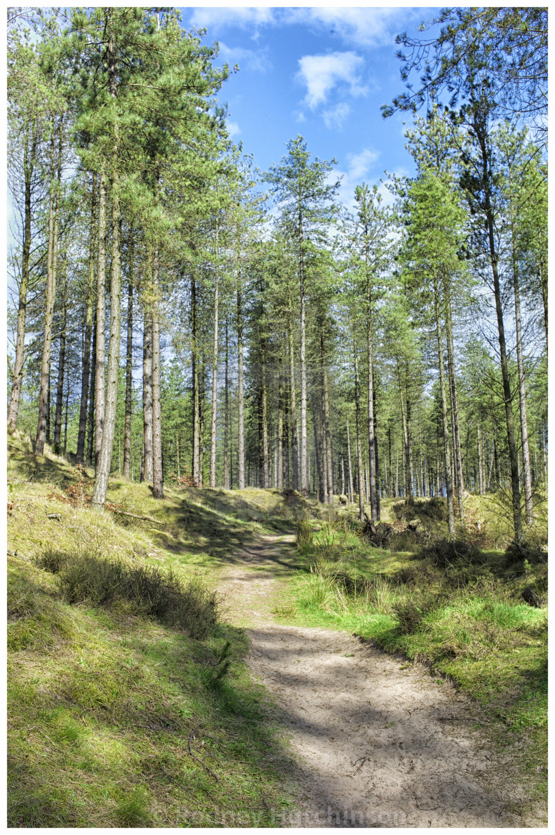 """Path through Torrs Warren woodland, Dumfries and Galloway"" stock image"