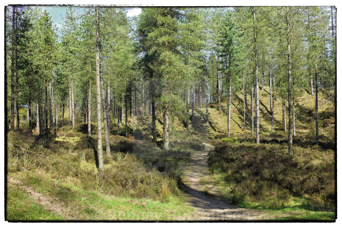 """Torrs Warren woodland, Dumfries and Galloway"" stock image"