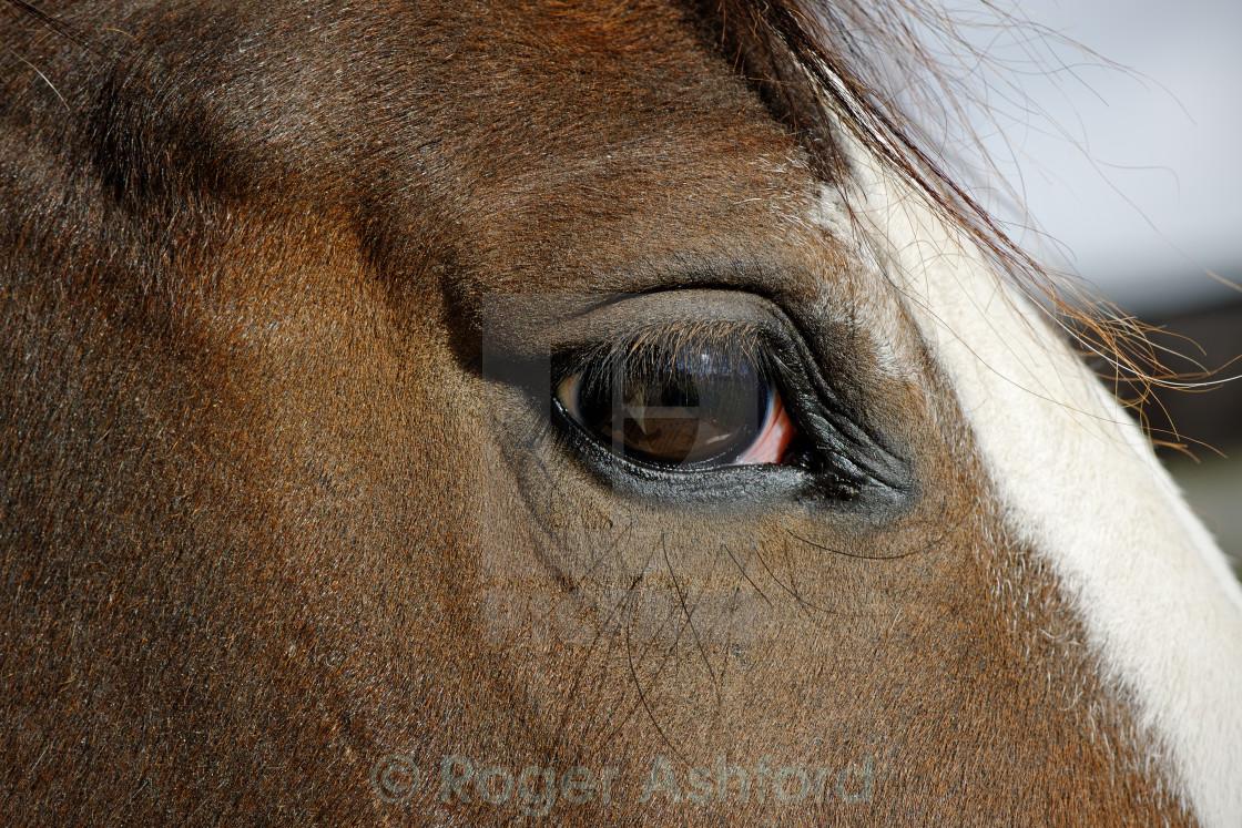 """""""Horse Eye Close Up"""" stock image"""