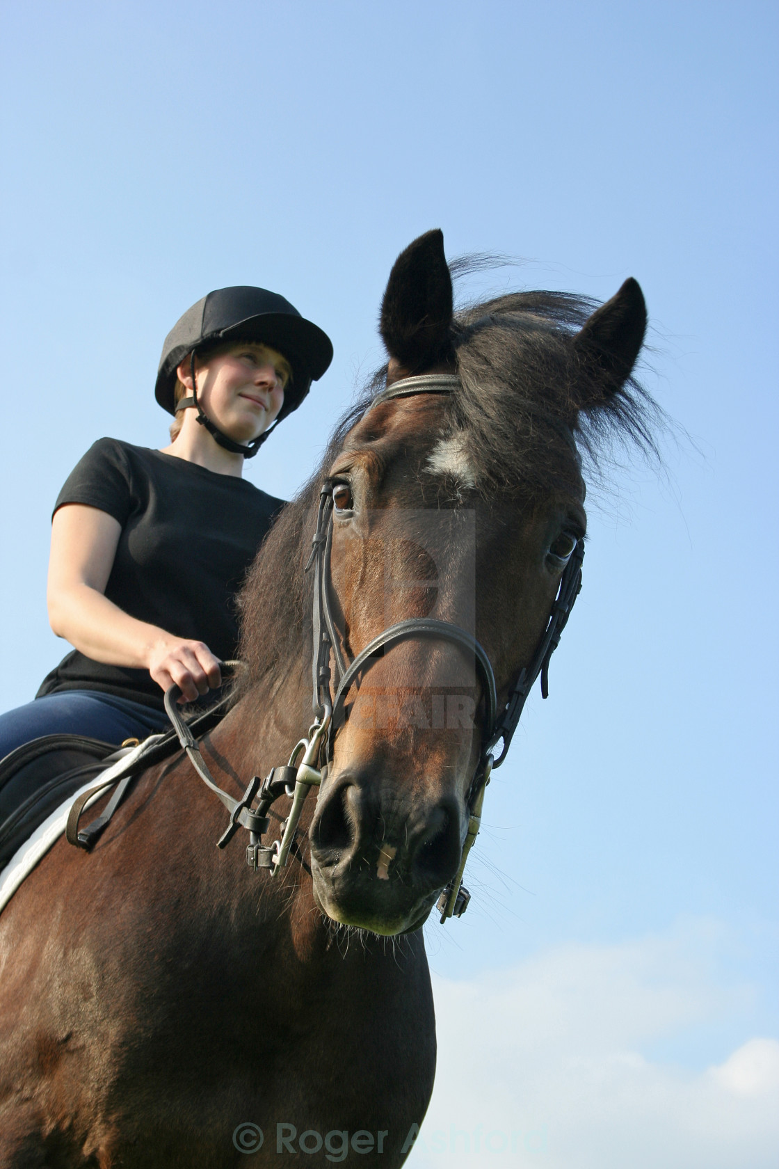 """Young Rider and Horse"" stock image"