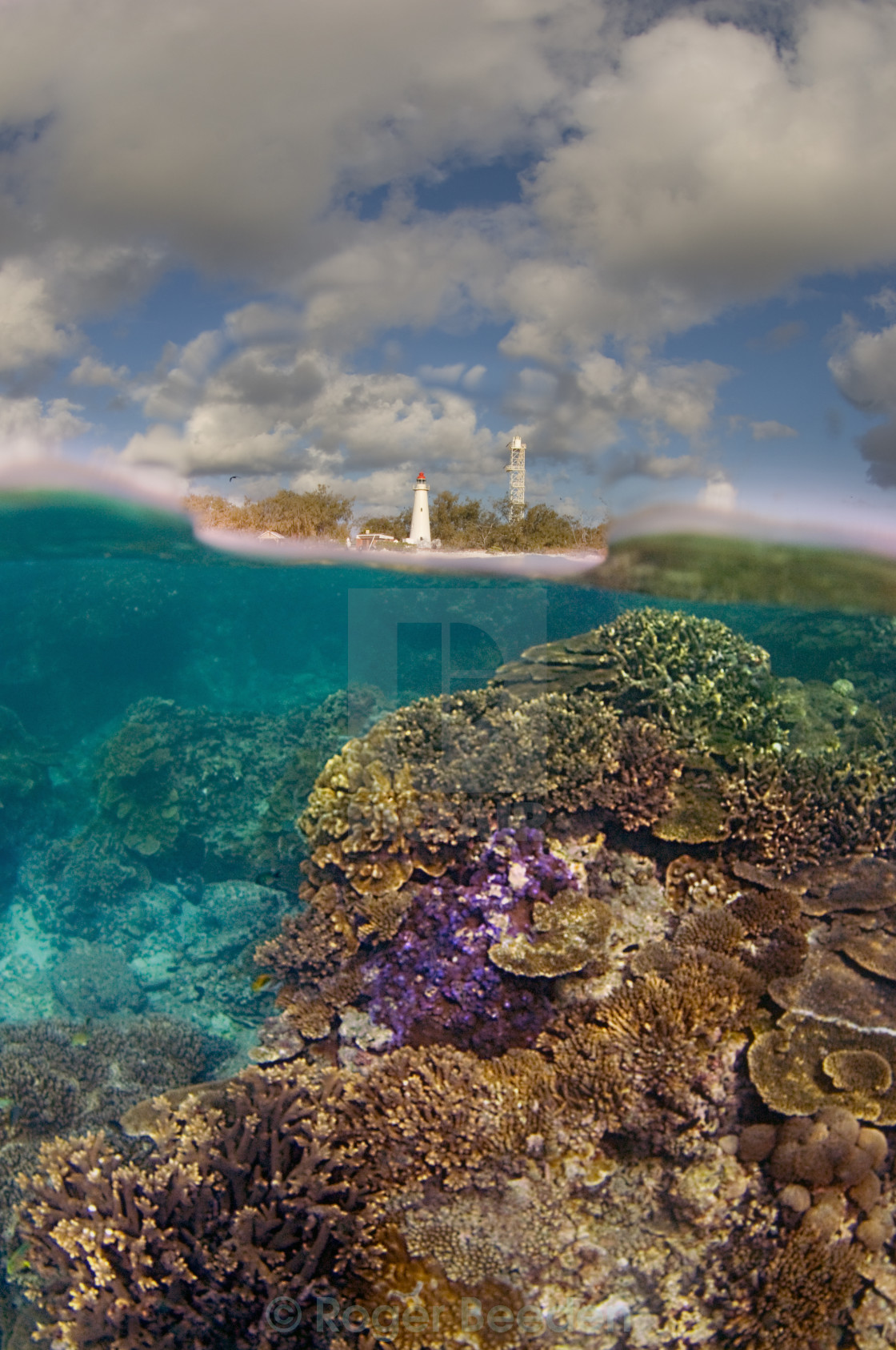 """""""Light on the Reef"""" stock image"""