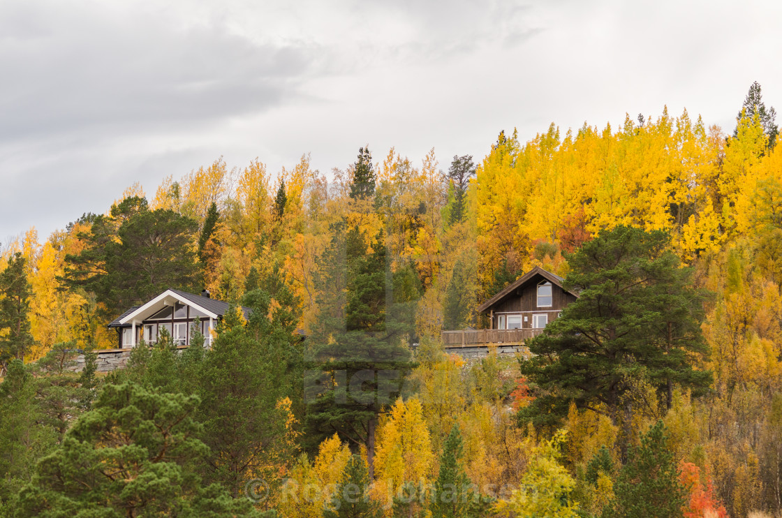 """""""Cabins with yellow leaves"""" stock image"""