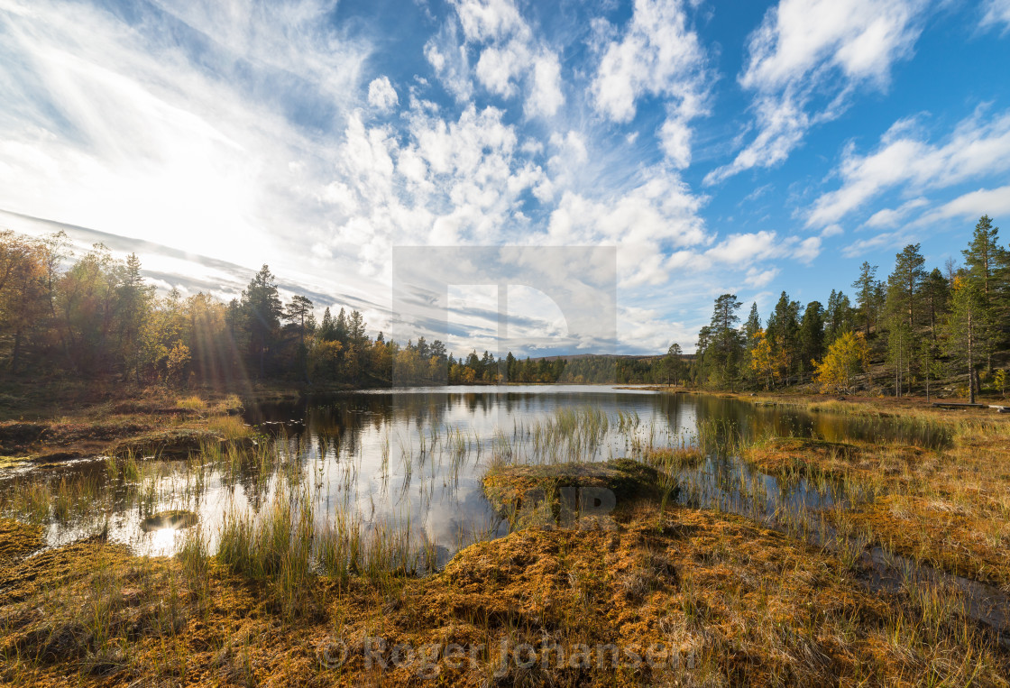 """Small pond in autumn"" stock image"