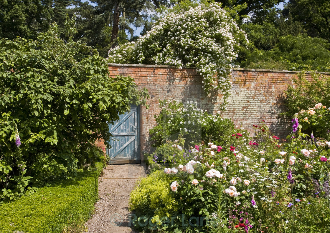 """Walled Garden and Roses, Spetchley"" stock image"