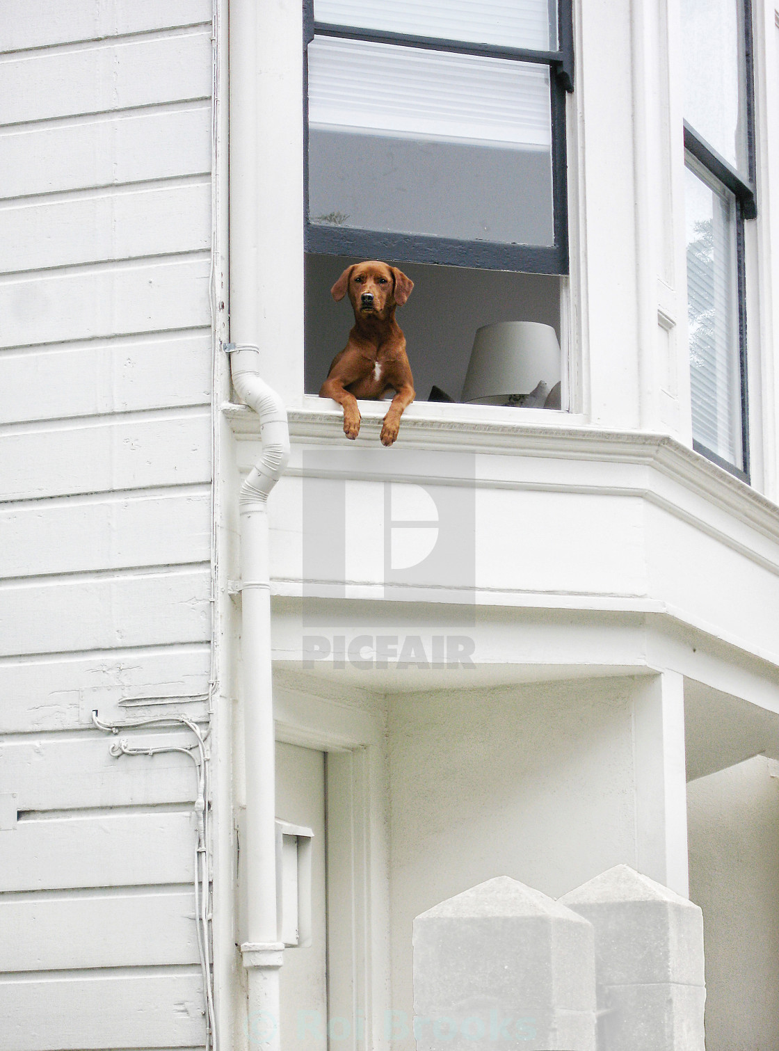 """Dog at the window"" stock image"