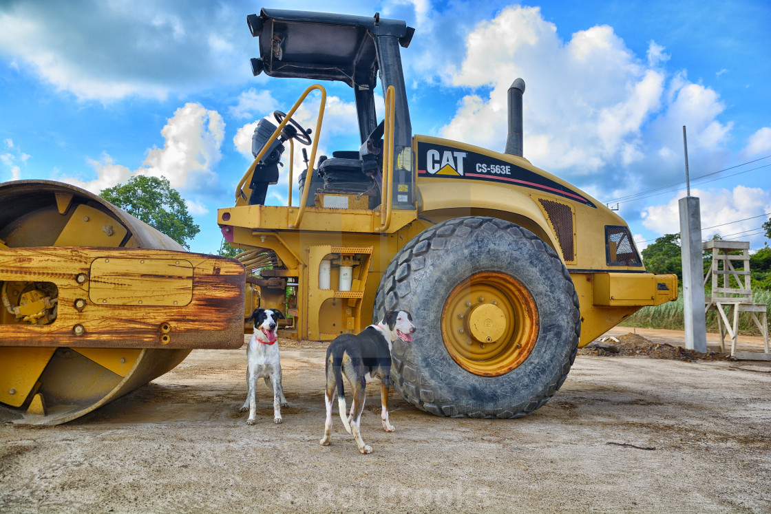 """Cat and Dogs"" stock image"