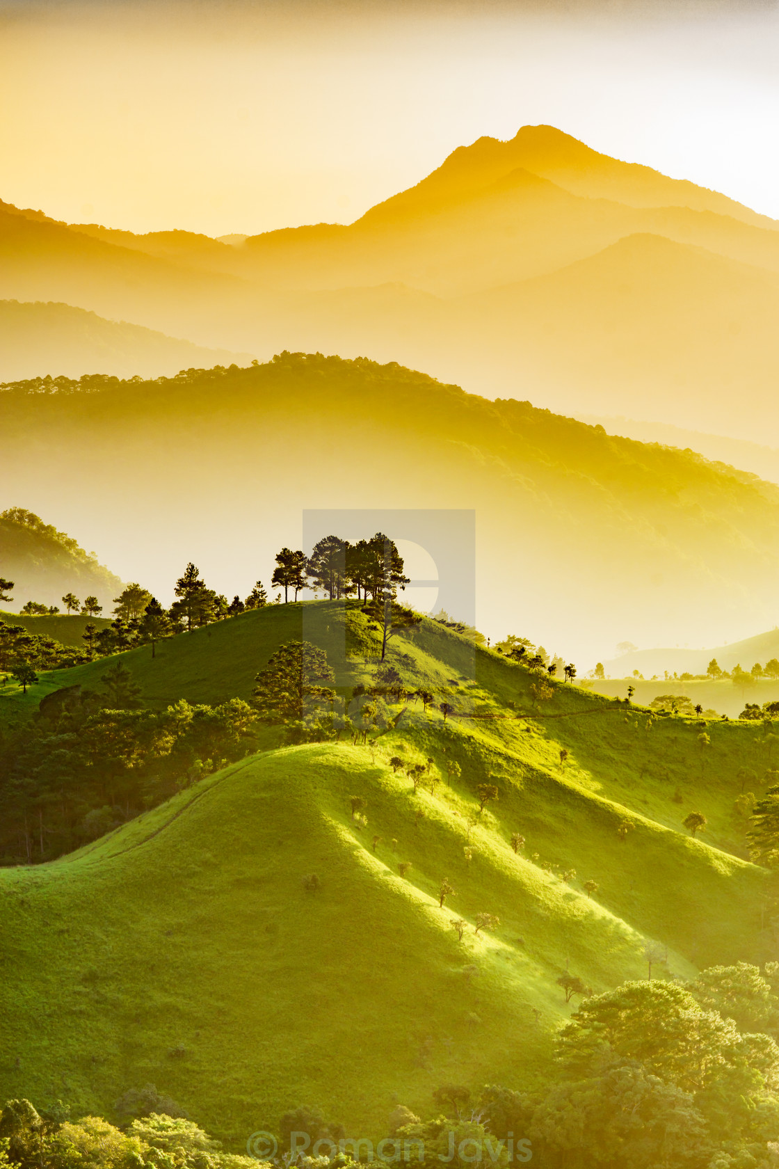 """Landscape of valley, forest, hill in sunlight"" stock image"