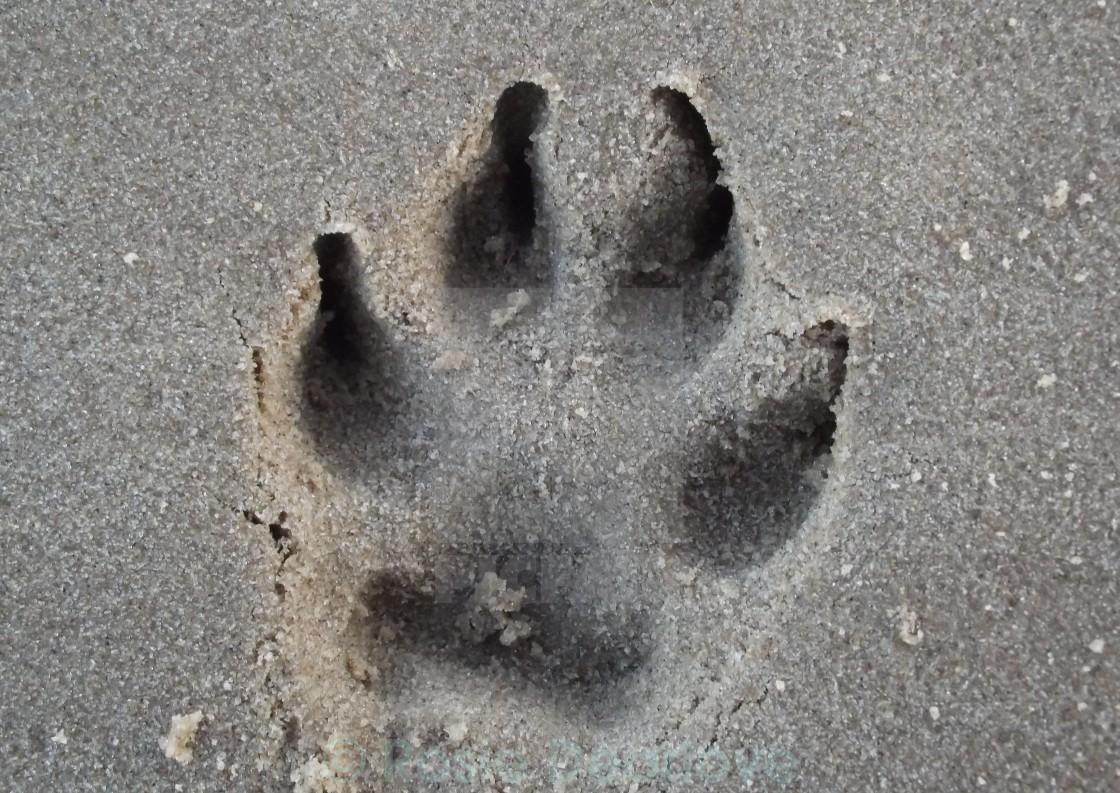 """Dog Paw Print"" stock image"