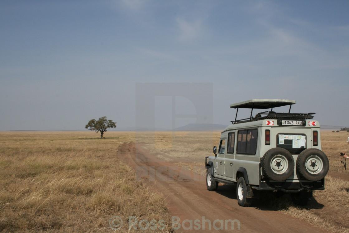 """""""On safari"""" stock image"""
