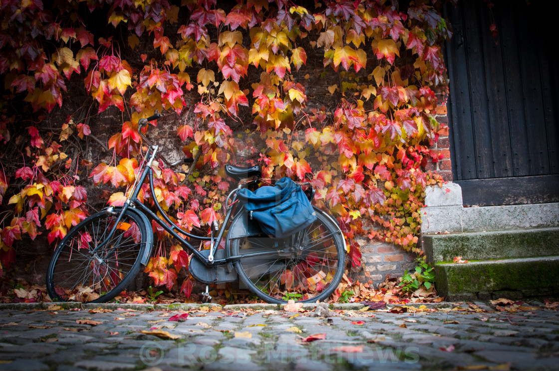"""Autumn leaves and bike"" stock image"