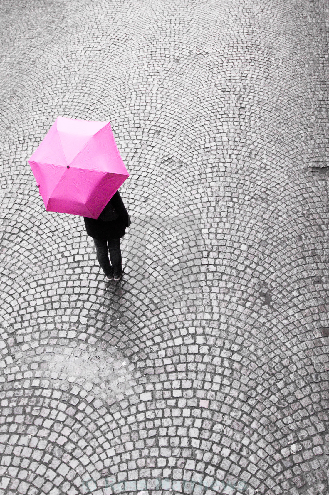 """Magenta Umbrella"" stock image"
