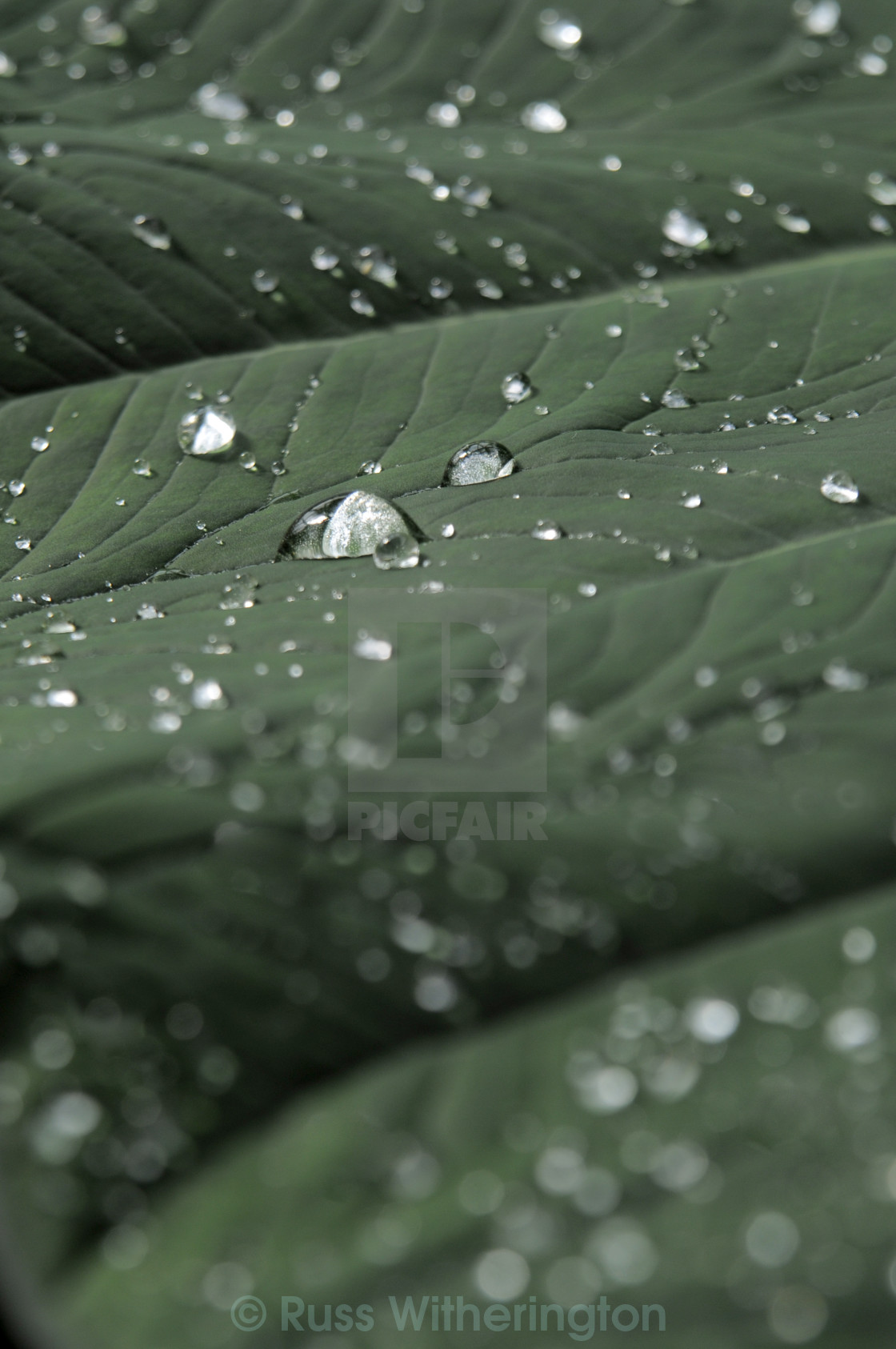 """Water Droplet"" stock image"