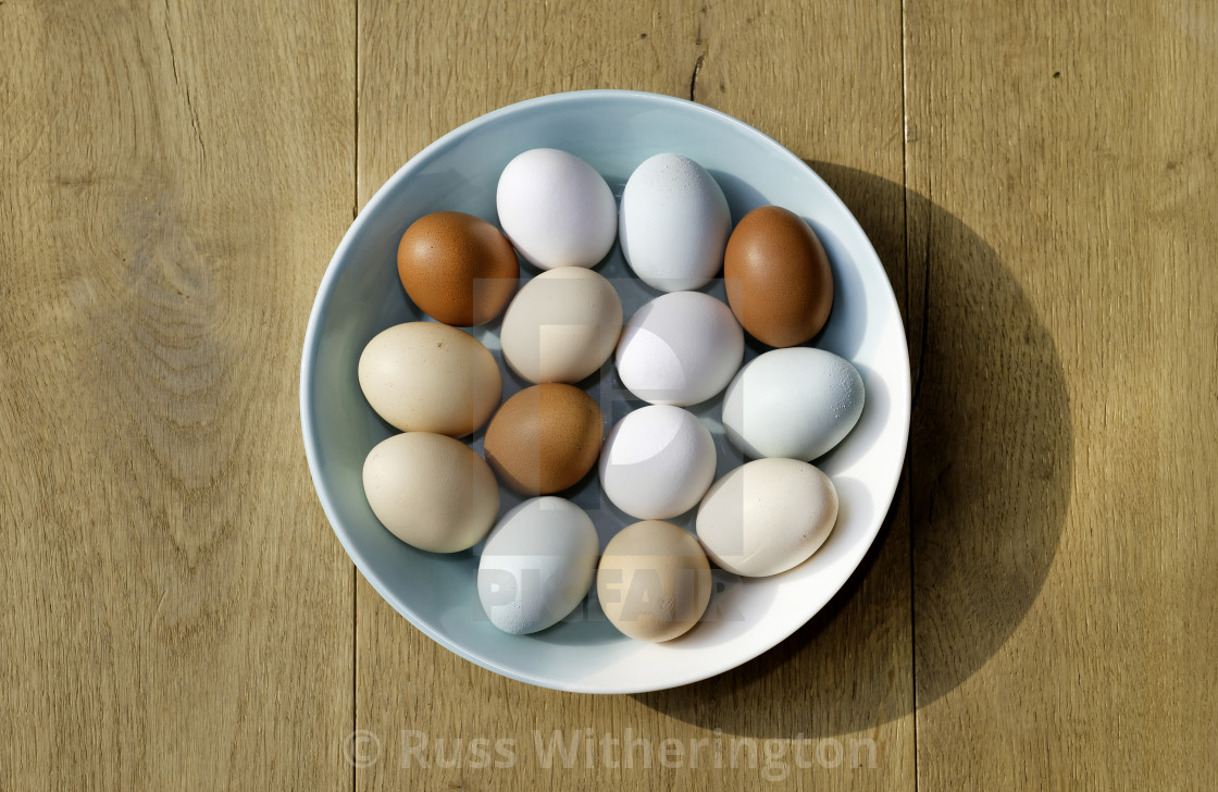 """chicken eggs"" stock image"