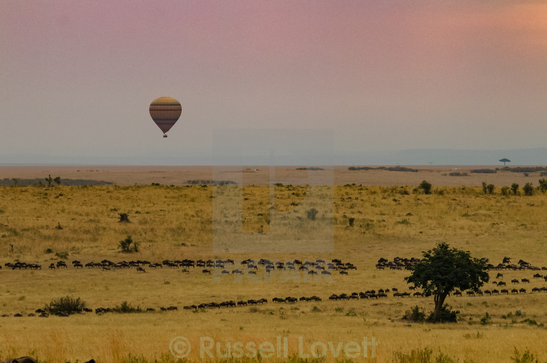 """Balloon over the Maasi Mara"" stock image"