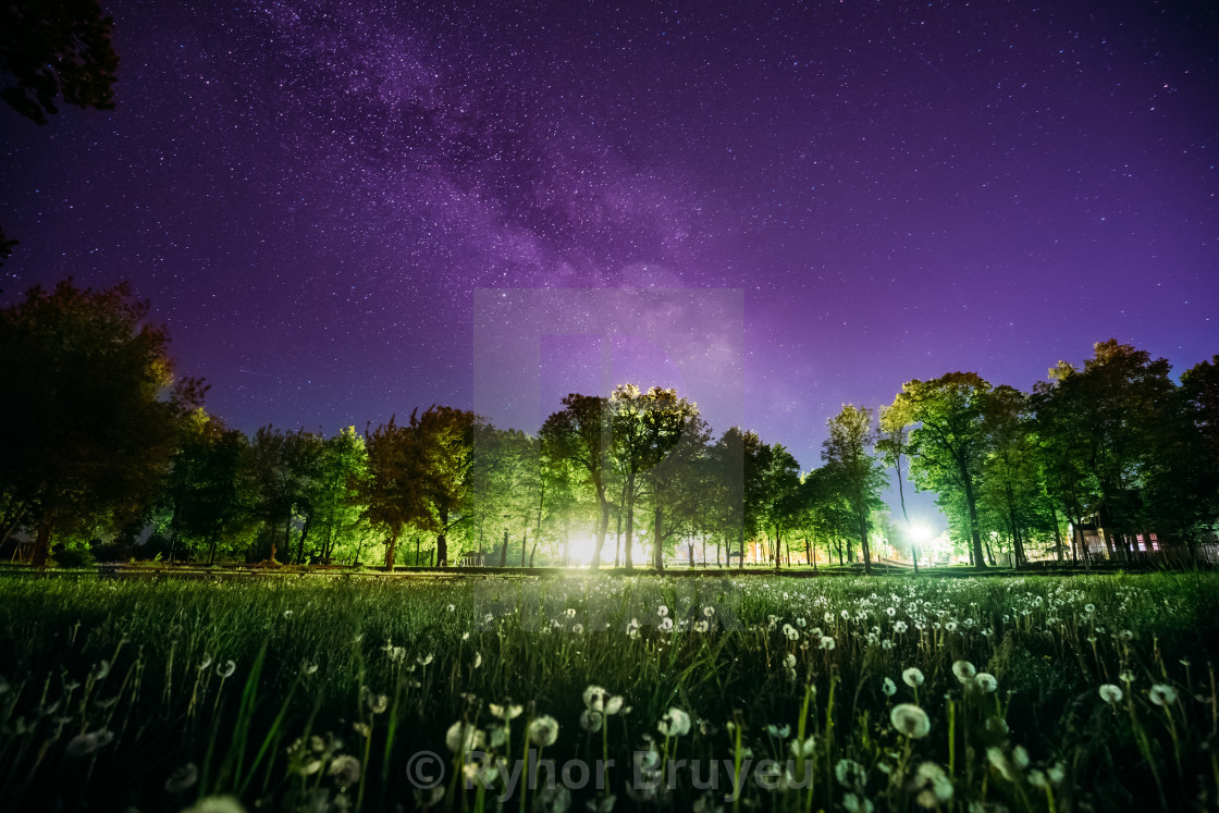 """""""Green Trees Woods In Park Under Night Starry Sky In Violet Color. Landscape..."""" stock image"""