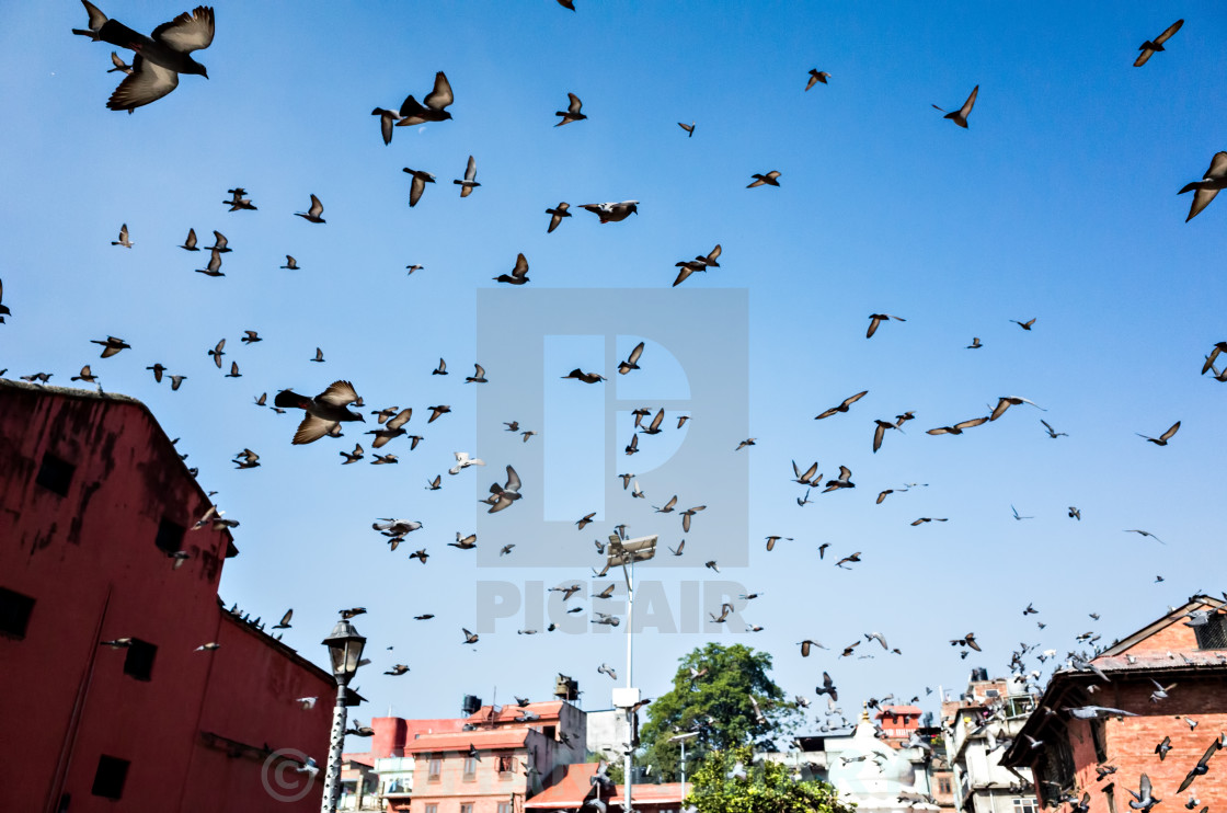 """""""Flying Pigeons"""" stock image"""