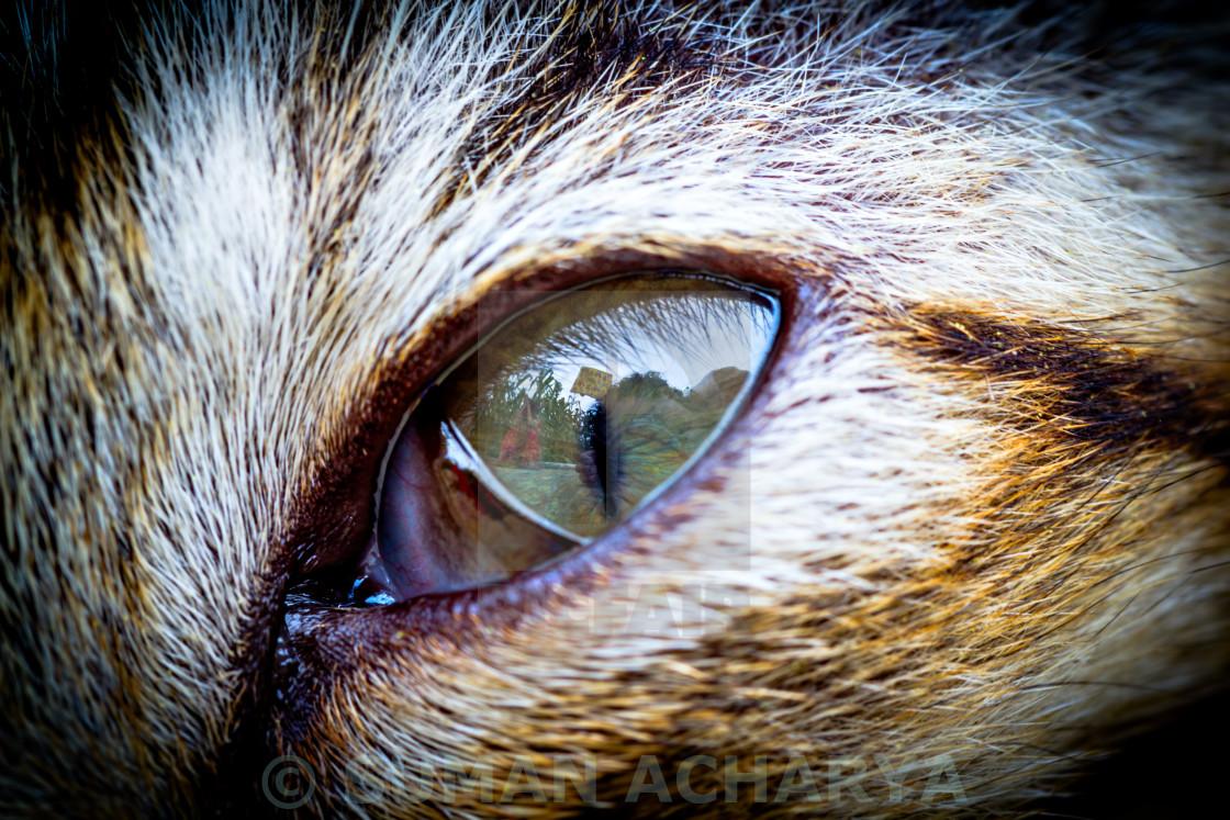 """Kitten Eye"" stock image"