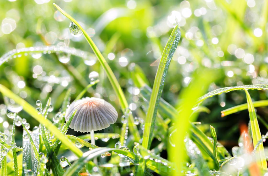 """Morning Mushroom"" stock image"