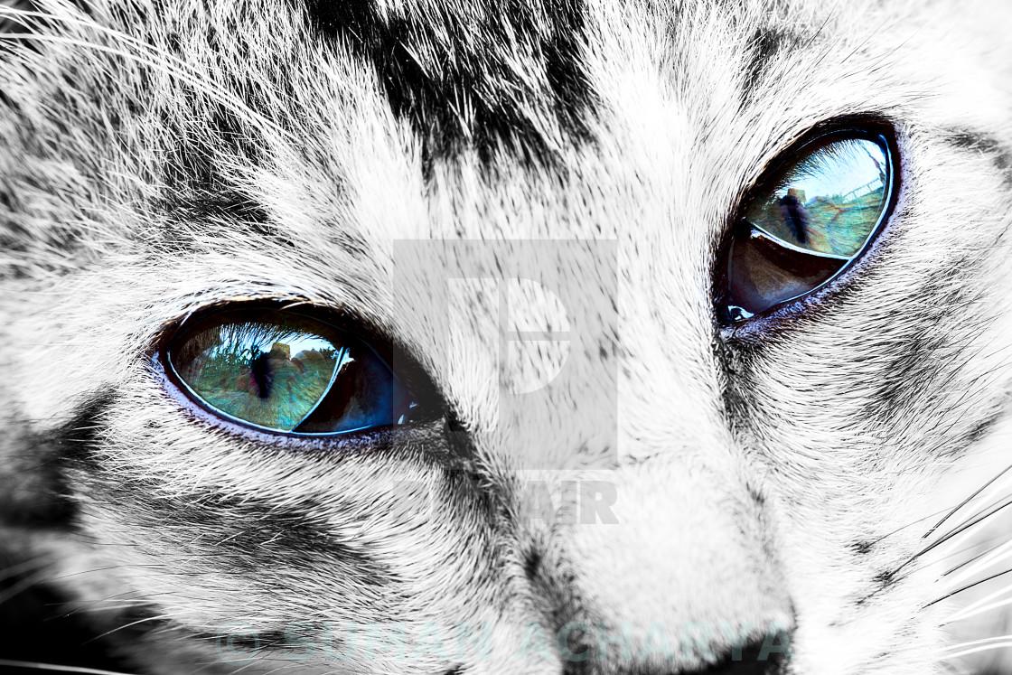 """Kitten's Eyes"" stock image"