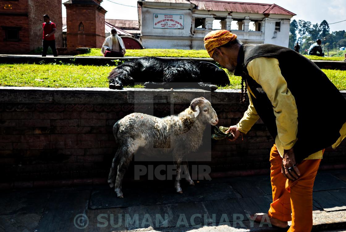 """Love The Lamb of God!!"" stock image"