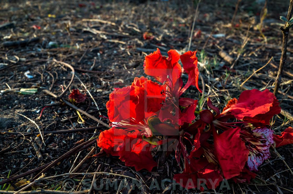 """Fallen Red"" stock image"