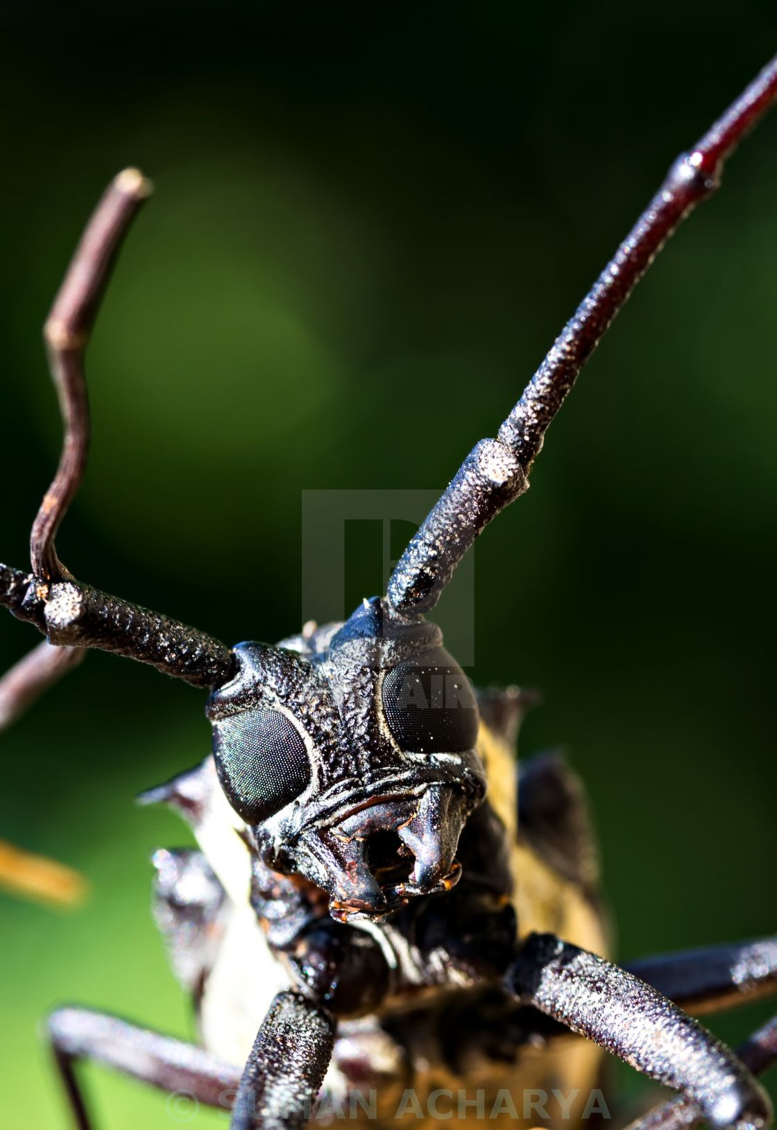 """""""Beetle Face"""" stock image"""