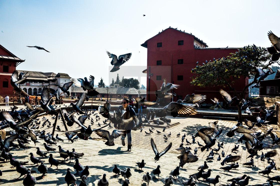 """Enjoy Pigeons"" stock image"